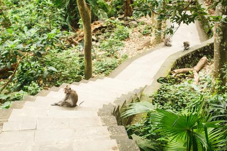 Mono en el bosque tropical asiático