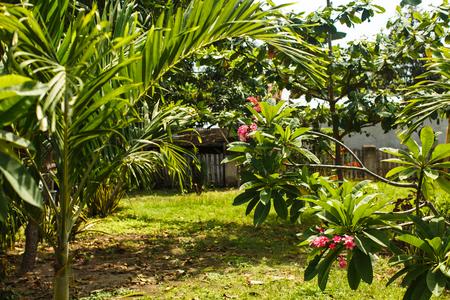 Paisaje tropical en Bali, selva en Asia Foto de archivo