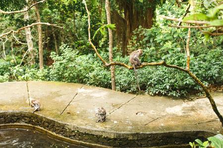 monkey in Asian rainforest