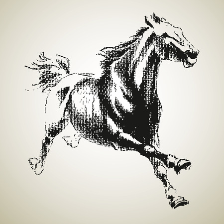horse competition: Horse drowing in a black and white style