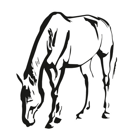 Horse drowing in a black and white style