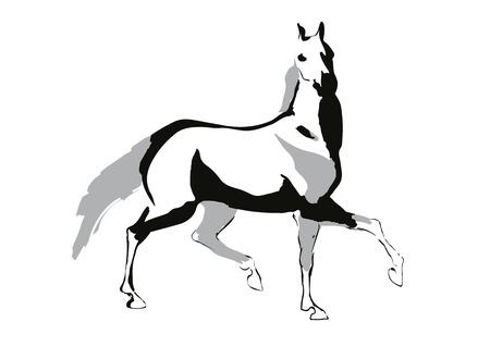 fantastical: Horse drowing in a black and white style