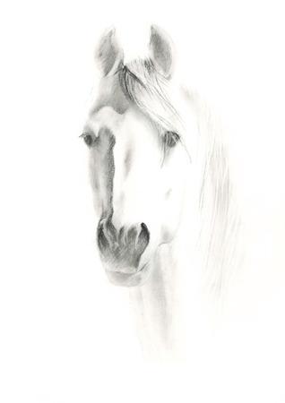 cavallo che salta: Ritratto di cavallo su sfondo bianco, a matita dipinto