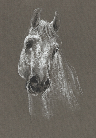 kind: Portrait of horse on craft gray background
