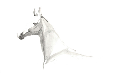 Portrait of horse, watercolor, on white background