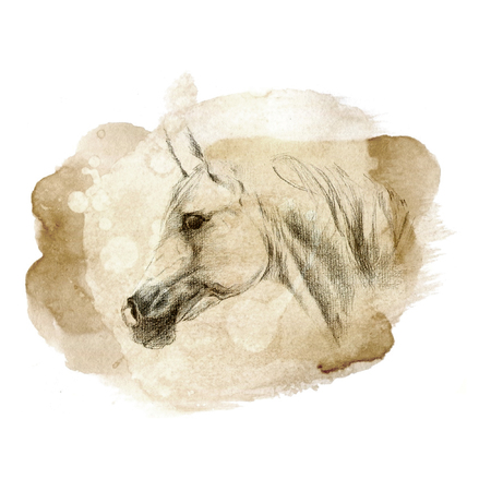 arabian horse: Arabian horse portrait illustration on old paper texture Stock Photo