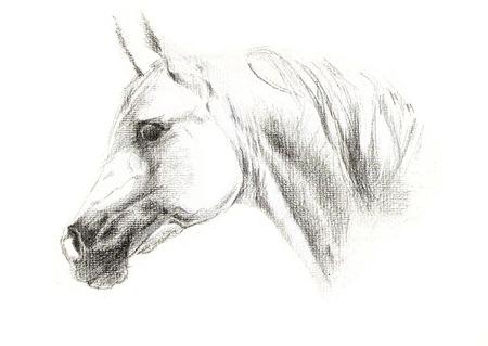 portrait illustration of arabic horse on white background