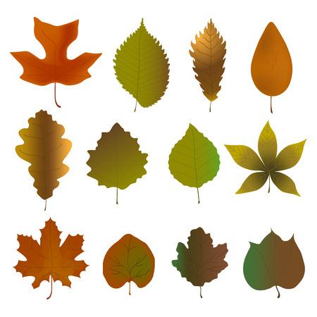 Fallen leaves set. Vector illustration of herbarium