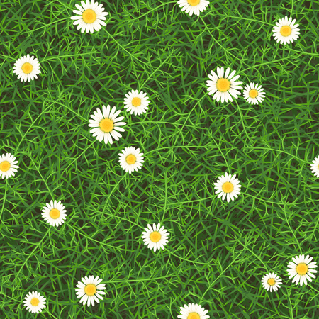 Seamless vector texture of green meadow grass with blooming wild daisies