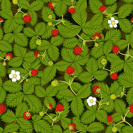Seamless vector texture of a strawberry meadow with leaves, flowers, ripe and green strawberry berries, top view 向量圖像