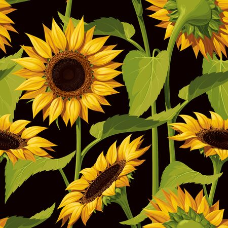 Seamless vector pattern of realistic sunflower flowers on a black background, with stems and leaves.
