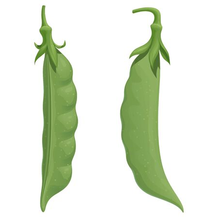 Two fresh green pea pods, isolated vector illustration on white