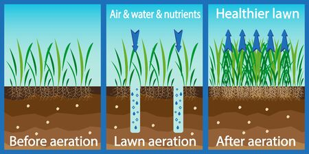 Aeration of the lawn. Enrichment with oxygen water and nutrients to improve lawn growth. Before and after aeration: gardening, lawn care services. Advantages, aeration. Vector Vetores