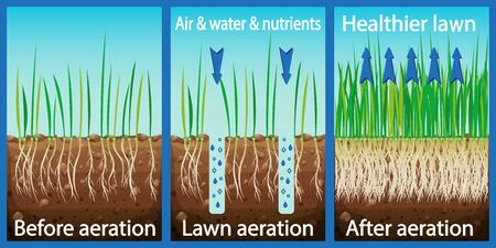 Aeration of the lawn. Enrichment with oxygen water and nutrients to improve lawn growth. Before and after aeration: gardening, lawn care services. Advantages, aeration. Vector 向量圖像