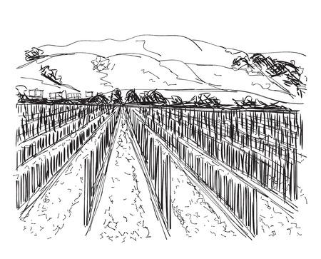 wine growing: Vineyard Landscape  - hand drawn illustration. Doodle field Illustration