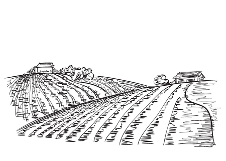Landscape with Fields. Hand drawn Vector Illustration