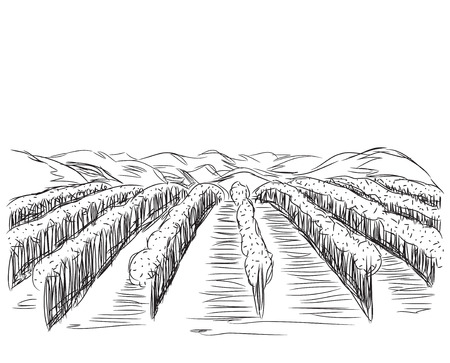 agrarian: Landscape with Fields. Hand drawn Vector Illustration