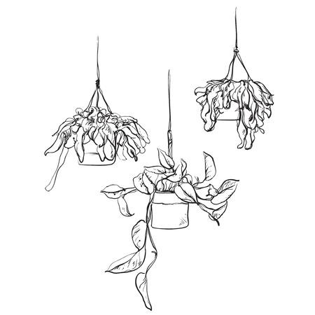 Pot plants set, vector illustration flowers in pots drawn black line on a white background, hand-drawn design elements. Illustration