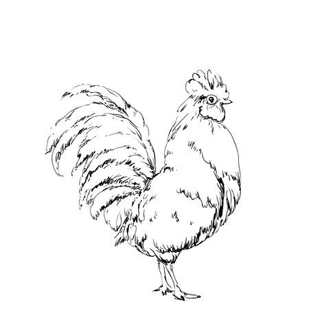 Hand drawn vector bird, chicken sketch. New year 2017 symbol
