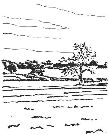 Landscape sketch. Tree and fields