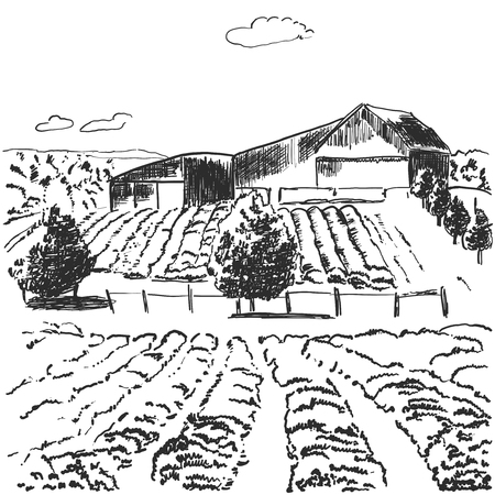 Vector image. Landscape with fields and house among the hills 版權商用圖片