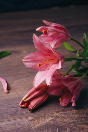 bouquet of pink lily flowers in the rays of light on a black background on a wooden rustic table. fresh buds of a flowering plant close-up, copy space. studio shot. the plot of the holiday card.
