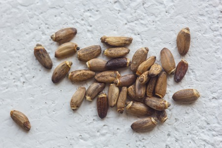 A heap of dried black flower seeds close-up on a white table background. planting season. close up top view copy space.