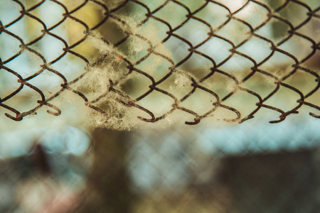 twisted woven metal mesh covered with poplar down on a blurred background close-up. fencing allergens on the street in summer. copy space. Stockfoto