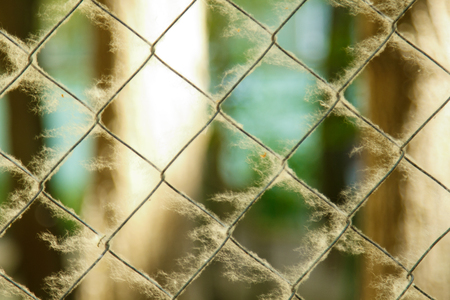 twisted woven metal mesh covered with poplar down on a blurred background close-up. fencing allergens on the street in summer. copy space. Archivio Fotografico
