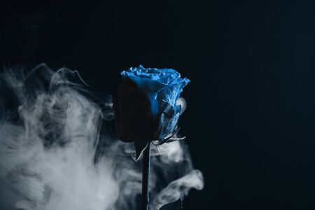 Fresh classic Pantone 2020 in blue. Color concept of the year. Delicate rose flower in the smoke. Flowers for the holiday, advertising, gift