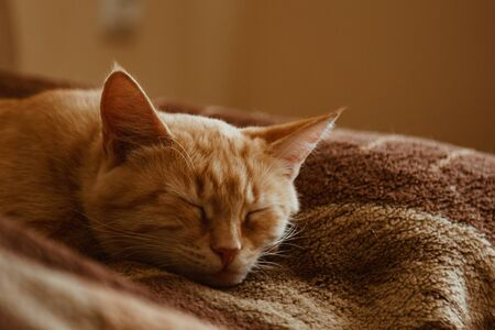 Cute cat sleeps at home in bed in the sun. Rest, relaxation, rumbling. View from above. Little kitty Stock Photo