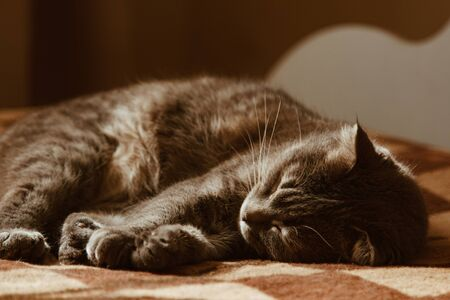 Cute cat sleeps at home in bed in the sun. Rest, relaxation, rumbling. View from above. Little kitty 写真素材