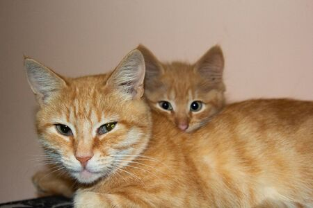 Cute cat sleeps at home in bed in the sun. Rest, relaxation, rumbling. View from above. Little kitten with mom cat