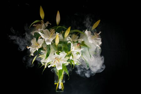 Lily branch in the rays of light on a black background. delicate, white flower. contours of a flower in atmospheric dark photography. flowers for the holiday, advertising, gift