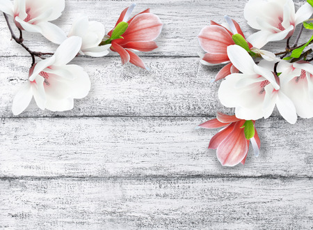 Magnolia flowers on background of shabby wooden planks in rustic style