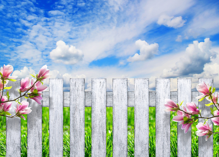 Wooden fence with magnolia flowers against the blue sky with clouds and grass Stock Photo