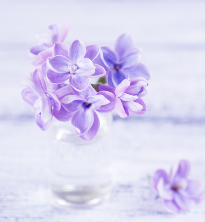 Lilac flowers in a small glass bottle. For this photo applied color toning and blurring effect.