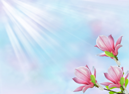 Mysterious spring floral background with blooming pink magnolia flowers and sun rays Stock Photo