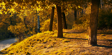 Mysterious spring golden forest background with pathway on a sunny day