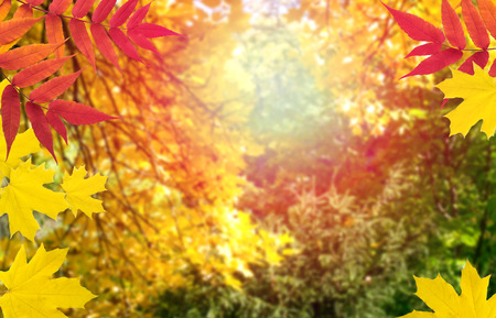 Mysterious blurred autumn forest background with autumnal leaves on a sunny day