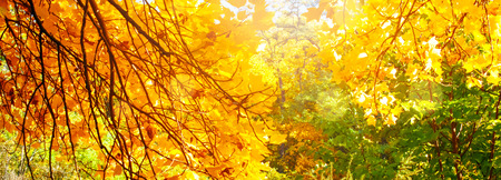 Mysterious autumn forest background with autumnal leaves on a sunny day and bokeh