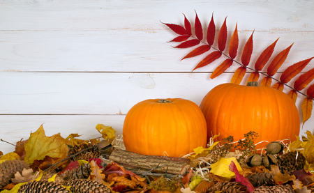 Festive still life with pumpkins on leaves on wooden wall background for Thanksgiving. Decoration for house interior. Empty place for text. Copy space.