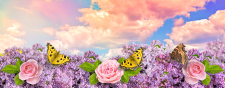 Lilac flowers with pink roses and butterflies with yellow wings in garden against the blue sky with spectacular clouds