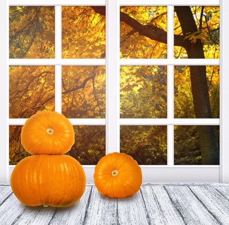 Interior de la habitación con marco de ventana y calabazas para el día de Acción de Gracias en la mesa de madera en estilo Shabby Chic. Día soleado de otoño con arce otoñal en el exterior.