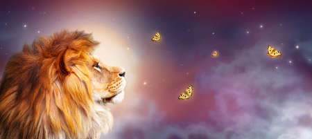 African lion and night savannah in Africa. Moonlight landscape with flying butterflies, king of animals. Proud dreaming fantasy lion in savanna looking on stars. Majestic dramatic starry sky banner. Standard-Bild