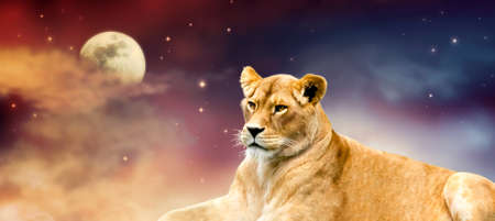 African lioness and moon night in Africa. Savannah wildlife landscape banner. Proud dreaming fantasy lion in savanna resting and looking forward. Spectacular dramatic starry cloudy sky and stars.