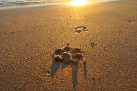 Footprint on the sand Banco de Imagens