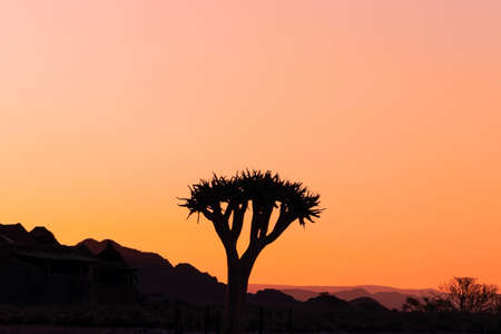 Lonely tree on a background of a beautiful sunset in the Namib desert
