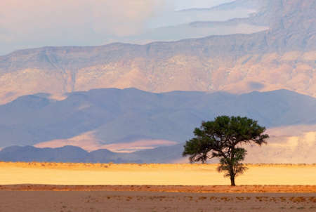 Lonely tree on a background of sand and mountains in the Namib desert