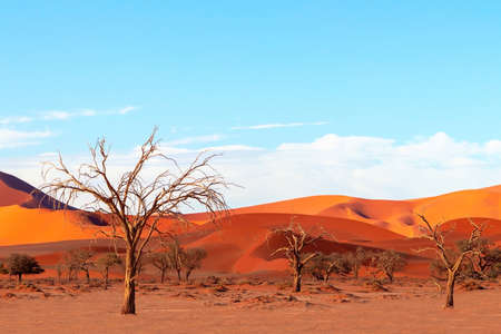 Dead trees  and sand dunes in the Namib desert Imagens